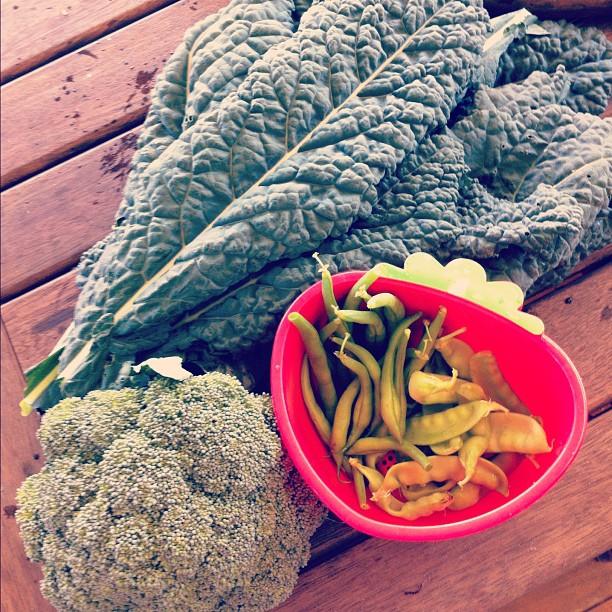Get enough iron as a vegetarian | Veggie Mama